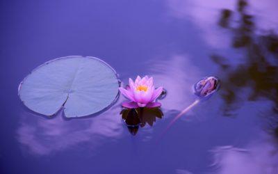 Od chaosu do kwiatu lotosu, czyli jak pożegnać się ze stresem i przywitać spokój